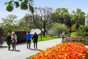 Veit du egentlig hvor mange parker som ligger på Tøyen? Det er tjukt av dem!